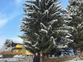 chkm_christbaum_kaiser_gerold_haider_baum_hoch_2016-11-08-PHOTO-00000067